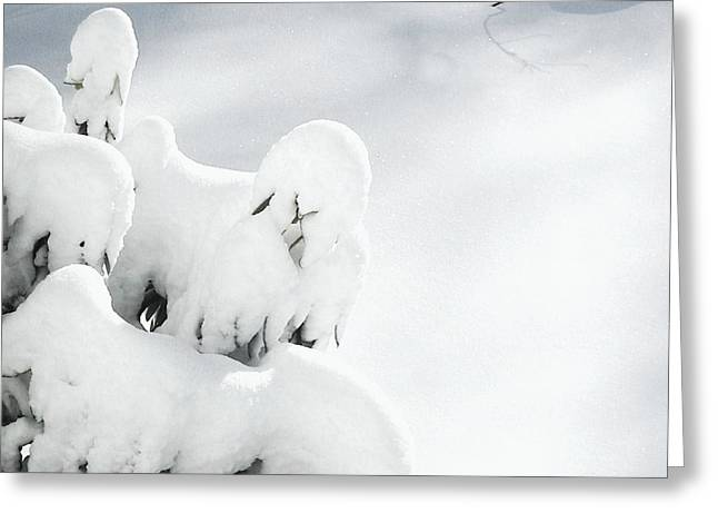 Greeting Card featuring the photograph Ghostly Snow Covered Bush by Pamela Hyde Wilson