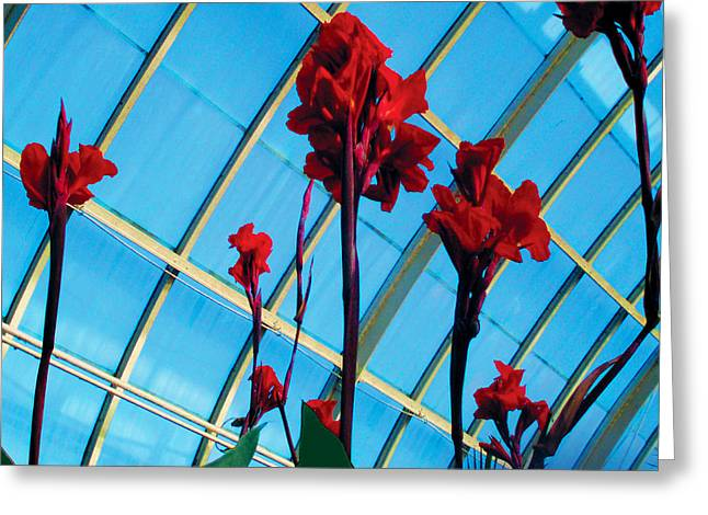 Giant Canna Lilly Greeting Card by David Klaboe
