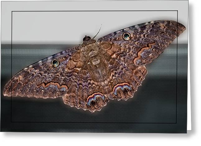 Greeting Card featuring the photograph Giant Moth by DigiArt Diaries by Vicky B Fuller