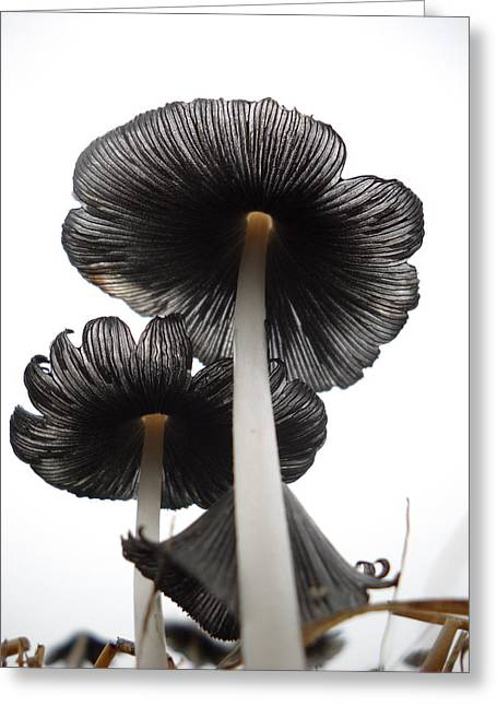 Giant Mushrooms In The Sky Greeting Card
