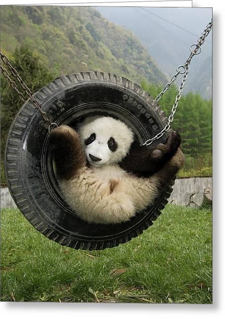Giant Panda Ailuropoda Melanoleuca Cub Greeting Card