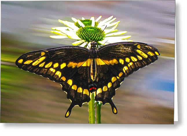Giant Swallowtail 2 Greeting Card