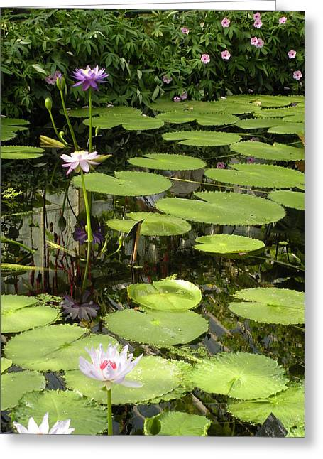 Giant Victoria Amazonica Lily 2 Greeting Card by Craig Johnson