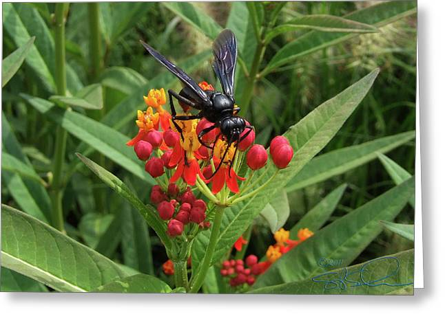 Giant Wasp Greeting Card