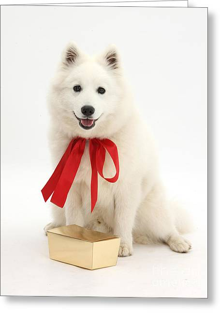 Gift Dog Greeting Card