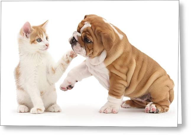 Ginger Kitten With Bulldog Pup Greeting Card