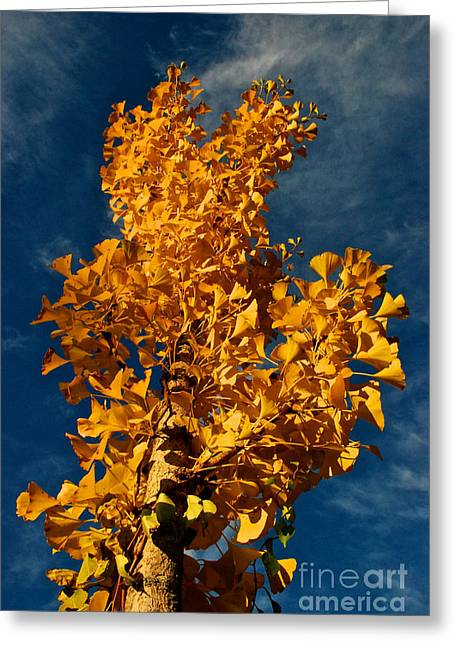 Gingko To The Sky Greeting Card