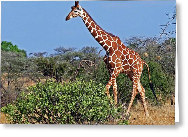 Giraffe Against Blue Sky Greeting Card