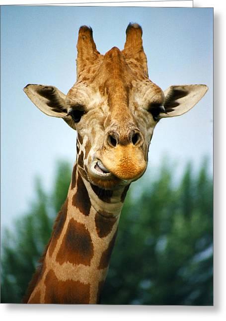 Giraffe Greeting Card by CJ Clark