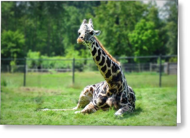 Giraffe II Greeting Card by Eva Kondzialkiewicz