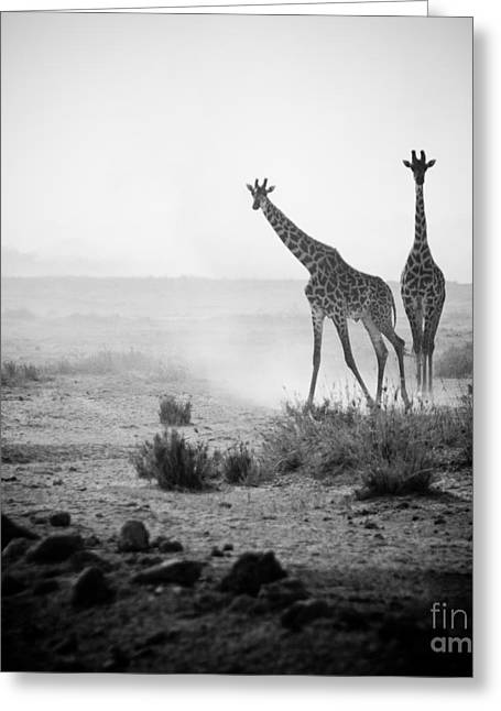 Giraffes In Amboseli National Park Kenya Greeting Card