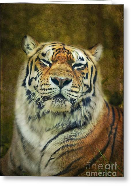 Give Me Your Tender Look Greeting Card by Aimelle