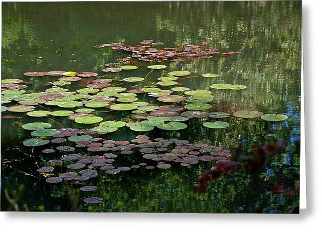Giverny Lily Pads Greeting Card by Eric Tressler