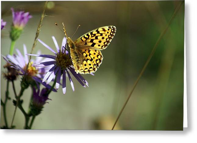 Glacier Butterfly Greeting Card by Marty Koch
