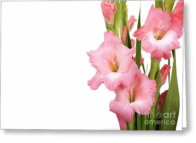 Gladioli On White Greeting Card