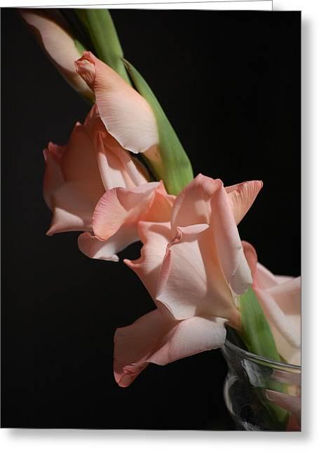 Gladiolus Greeting Card by Dickon Thompson