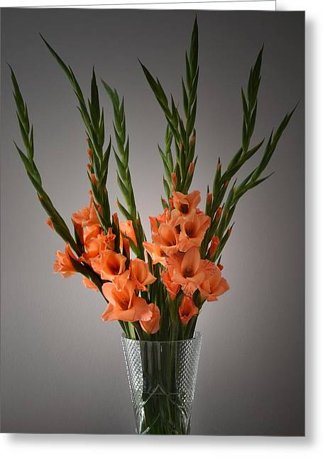Gladiolus Portrait. Greeting Card by Terence Davis