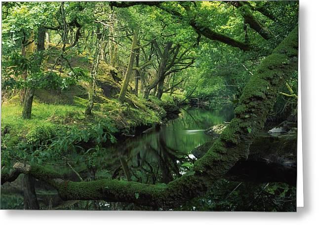 Glengarriff River, County Cork, Ireland Greeting Card by Richard Cummins