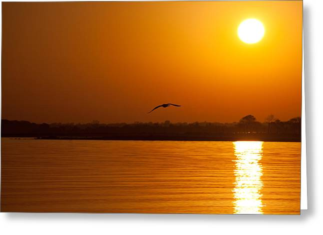 Glides Into Evening Greeting Card by Karol Livote