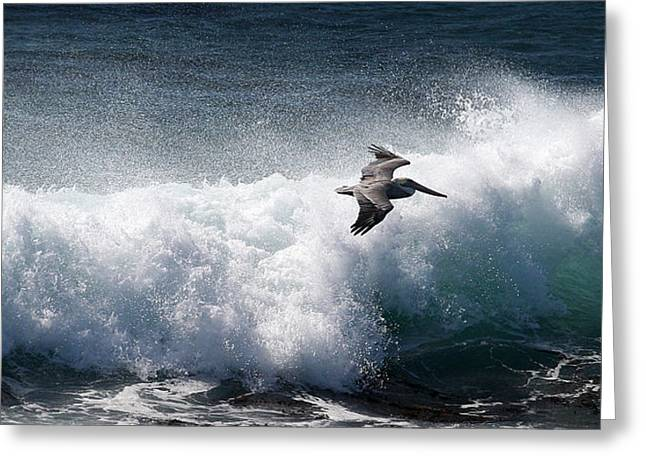 Greeting Card featuring the photograph Gliding Pelican by Michael Rock