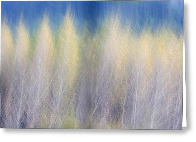 Glimpse Of Trees Greeting Card by Carol Leigh