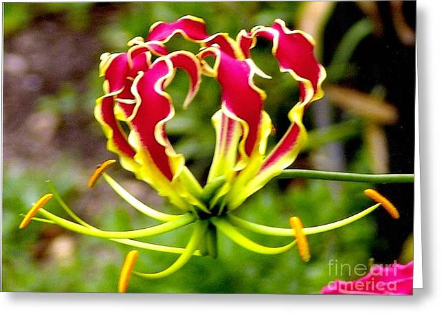 Gloriosa Lily Greeting Card by Rod Ismay