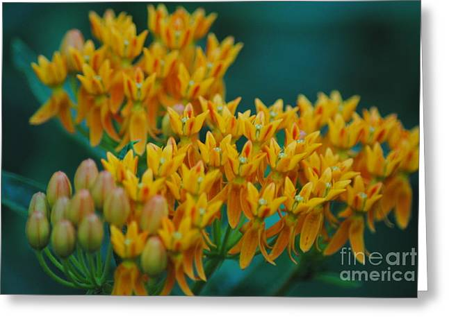 Glorious Colors Greeting Card by Tamera James