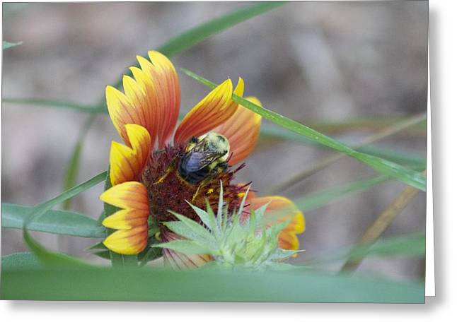 Glory Bumblebee Greeting Card by Michel DesRoches