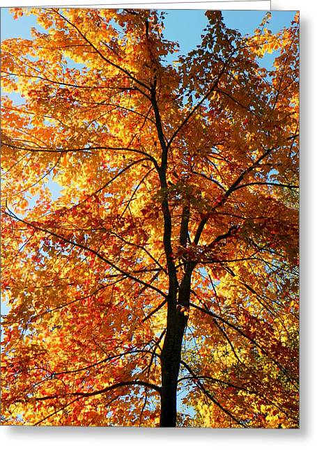 Glory Of Autumn Greeting Card by Jennifer Compton