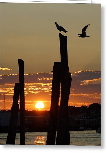 Gloucester Sunset Greeting Card by Matthew Green