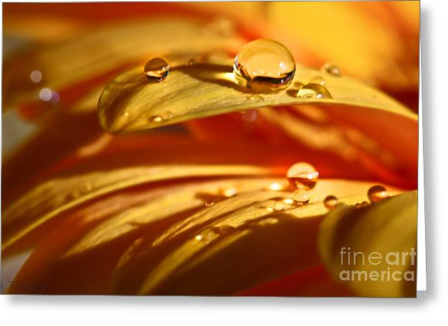 Glowing Amber Greeting Card by Tracy  Hall