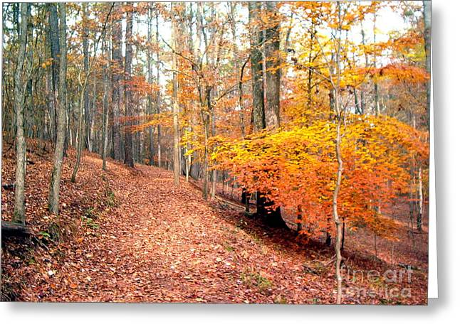 Greeting Card featuring the photograph Glowing Beeches by Gretchen Allen