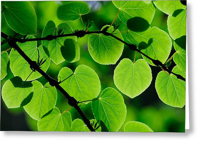 Glowing Heart Shaped Leaves Greeting Card by Hegde Photos