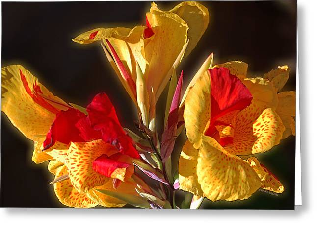 Greeting Card featuring the photograph Glowing Iris by DigiArt Diaries by Vicky B Fuller