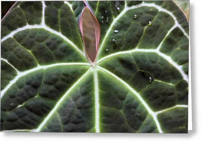 Glowing Leaf Greeting Card by Rosalie Scanlon