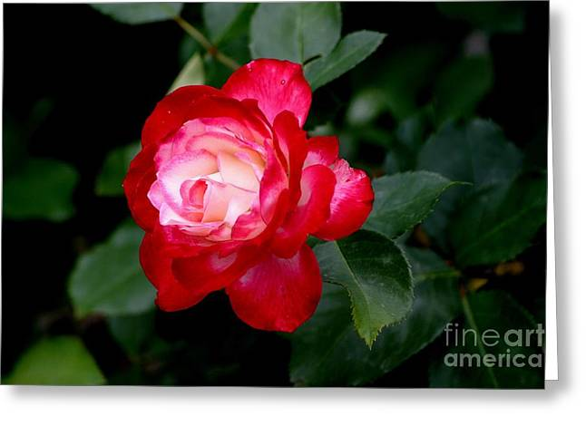 Glowing Greeting Card by Living Color Photography Lorraine Lynch
