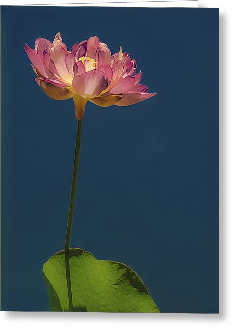 Glowing Lotus Greeting Card by Jill Balsam