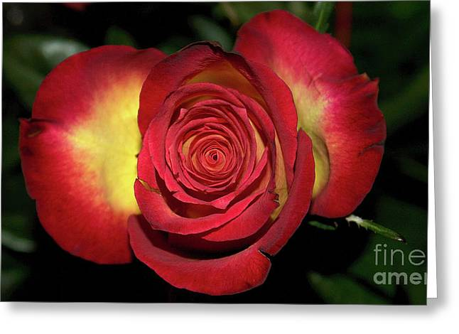 Glowing Rose Greeting Card