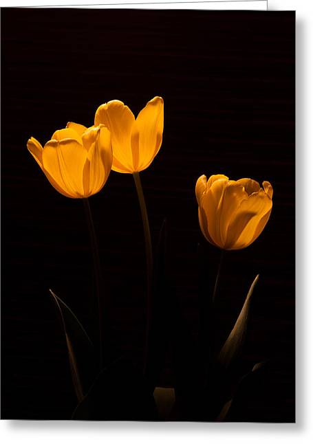 Greeting Card featuring the photograph Glowing Tulips by Ed Gleichman