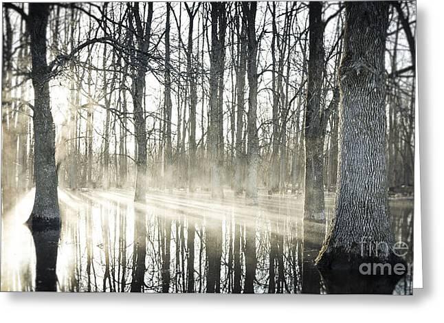 Glowing Woods Greeting Card