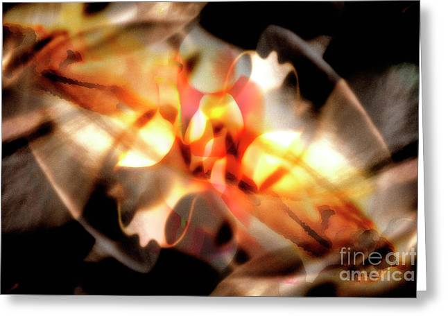 Gmelina Explosion Greeting Card by Keith Kapple