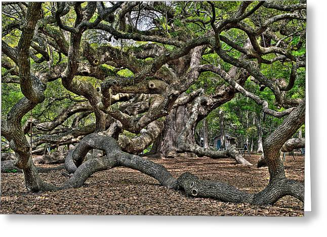 Gnarled Greeting Card