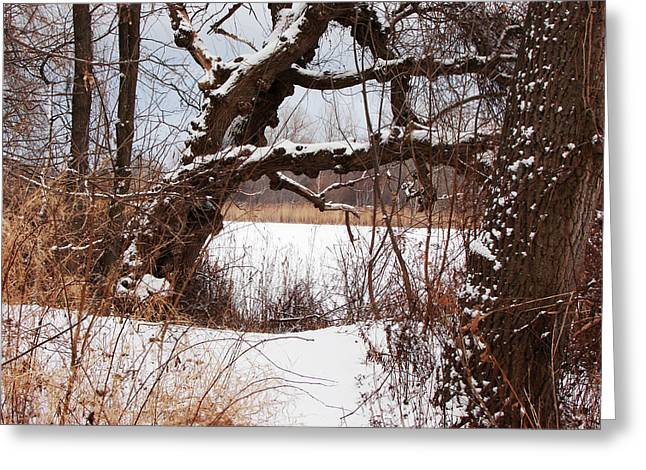Gnarled Tree By Lake Chipican Greeting Card