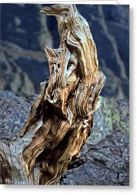 Gnarled Tree Stump Greeting Card by Rod Jones