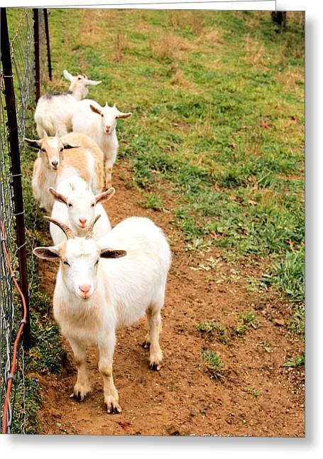 Goats Greeting Card by Carolyn Postelwait