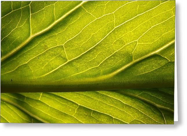 Greeting Card featuring the photograph Going Green by Gerald Strine