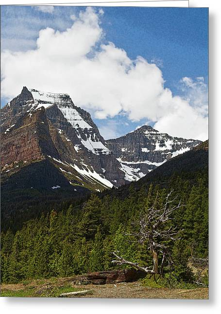 Going To The Sun Mountain Glacier National Park Spring Tree Larry Darnell Greeting Card by Larry Darnell