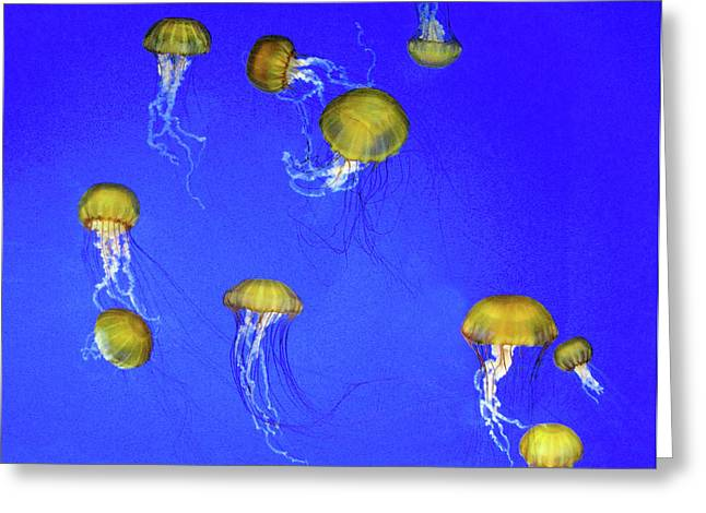 Gold Jelly Swarm Greeting Card