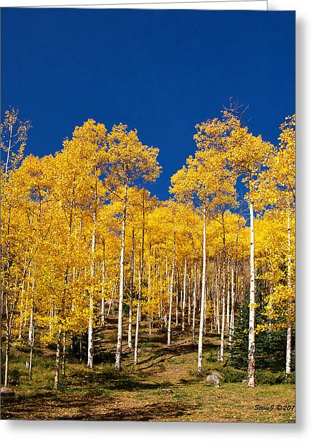 Golden Aspen Stands Greeting Card by Stephen  Johnson