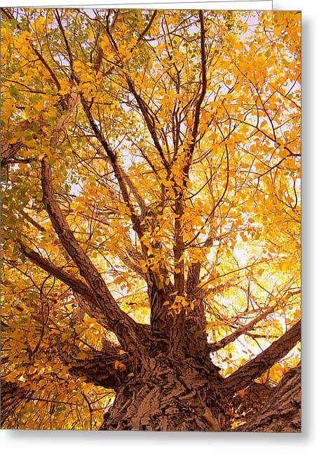 Golden Autumn View Greeting Card by James BO  Insogna
